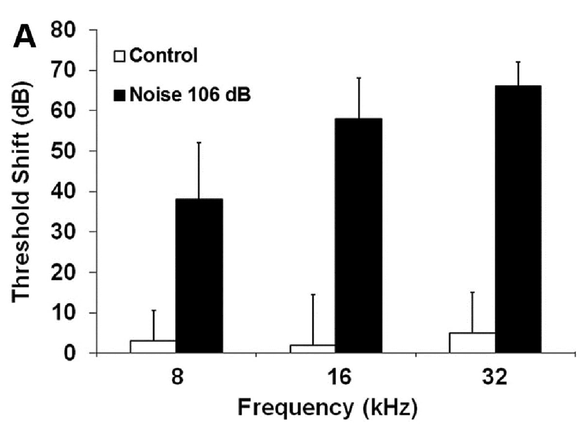 The bar graph represents the permanent NIHL in 3-month-old male CBA/J mice resulting two weeks after exposure to 2–20 kHz broadband noise (BBN) at 106 dB SPL for two hours.
