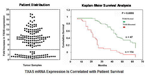 TXAS mRNA Expression is Correlated with Patient Survival